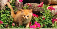 10 piante velenose per i gatti