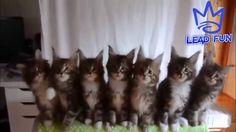top ten funny cat videos