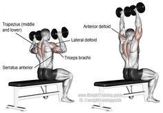 Seated dumbbell overhead press exercise