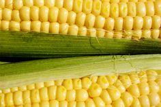 Milho de Pipoca - De fato, o fluxo gênico no milho é possível, e exige estratégias específicas para permitir a coexistência segura entre duas variedades que se deseja manter puras. Um exemplo de lavouras comerciais de milho mantidas com isolamento são as dos milhos especiais, como milho doce, milho pipoca e milho branco. Essas estratégias de coexistência vêm sendo utilizadas pelos melhoristas de milho desde 1920, quando se iniciou o uso do milho híbrido.