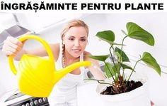 food for plants Household Plants, Indoor Flowers, Cool Websites, Landscape Design, Diy And Crafts, Home And Garden, Indoor Gardening, Facebook, Bonsai