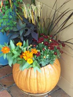 Container created by Garden Whimsies by Mary.  Pumpkins are fabulous containers for fresh cut flowers, living plants, and most specially for plopping in Mums in the Fall on DR table and of course outside the front door!!! and kitchen door!!