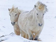 Winter is around the bend by Helgi Skulason, via Flickr