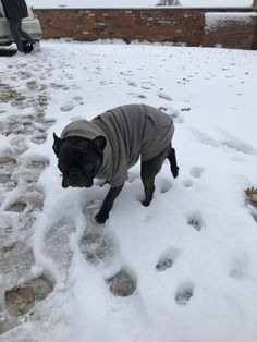 Dolly isn't sure about the snow. French Bulldog, Snow, Friends, Outdoor, Amigos, Outdoors, French Bulldog Shedding, Bulldog Frances, Outdoor Games