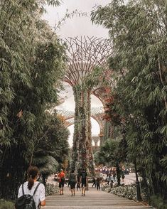 ezra (@ezkywalker) • Instagram photos and videos #singapore #travel #wander #SG, gardens by the bay #architecture #places Singapore Travel, Gardens By The Bay, Other Countries, Wander, Philippines, Dolores Park, Photo And Video, Country, Architecture