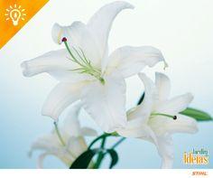 Para decorar sua festa de Réveillon aposte em lírios brancos, que simbolizam pureza e paz. <3