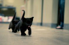 adorable black Kittens