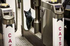 Les chats ont pris le pouvoir sur la publicité dans le métro londonien pour permettre aux gens de respirer pendant deux semaines sans être agressé par des campagnes de pub.