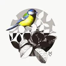 Zdjęcie: Bird. Visit my website cicholazart.com