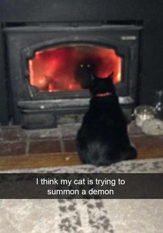Click to see that when you combine Snapchat and cats you get an endless source of unforgettable comedy.