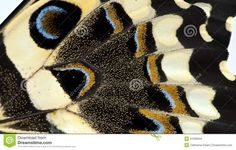 close up images of butterfly wings   ... the Wings of Love on Pinterest   Butterfly wings, Close up and Wings