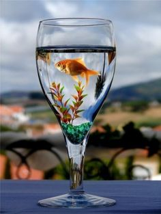 Gold Fish In A Glass