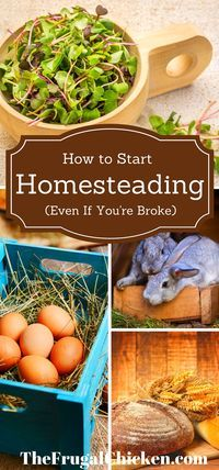 can start homesteading today using these simple hacks I've learned over the years. You don't need a lot of money, either.You can start homesteading today using these simple hacks I've learned over the years. You don't need a lot of money, either. The Farm, Mini Farm, Small Farm, Homestead Farm, Homestead Survival, Survival Tips, Survival Quotes, Homestead Layout, Survival Skills