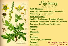 Agrimony Magical Properties - The Magical Circle School - www.themagicalcircle.net