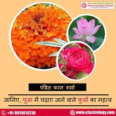 जानिए, पूजा में चढ़ाए जाने वाले फूलों का महत्व- फूल हमारी श्रद्धा और भावना का प्रतीक होते हैं. इसके साथ ही ये हमारी मानसिक स्थितियों को भी बताते हैं. पंडित जी के अनुसार हर फूल के रंग और सुगंध का एक मतलब होता है. अलग-अलग प्रकार के फूल अलग तरह का प्रभाव पैदा करते हैं.