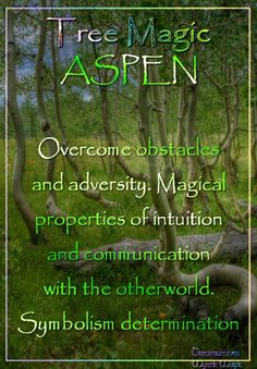 ASPEN Overcome obstacles and adversity. Magical properties of intuition and communication with the otherworld. Symbolism determination