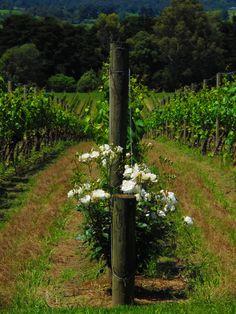 Yarra Valley Wineries...