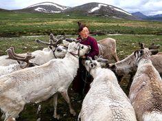 Une éleveuse de rennes au nord de la Mongolie