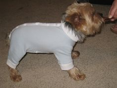 Little, hungry dog babies. | Which Animal Looks The Cutest In A Onesie?