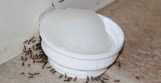 Sem dó! Receita caseira exterminadora de Formigas