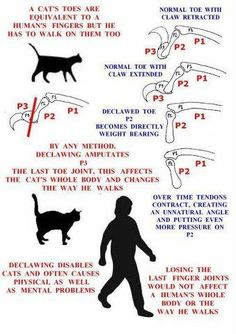 Declawing cats leaves the defenseless and disabled.   Please don't do it!