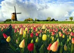 Pella Tulip Festival  Pella, Iowa absolutely beautiful. I usually come for the tulips and stay for the Dutch letters!!