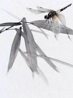 Sumi E Painting, Japan Painting, Chinese Painting, Watercolor Paintings, Watercolor Animals, Watercolor And Ink, Art Chinois, Art Asiatique, Dragonfly Art