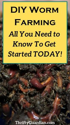 Farming DIY How to start your own worm farm and make your own compost. Create a compost bin and get into vermiculture! How to DIY a worm farm with a tote. Grow a better garden on a budget.How to start your own worm farm and make your own compost. Create a