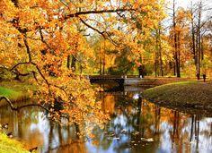 В каких пригородных парках осенью не нужно платить за вход    Осень — пора наслаждаться желтыми листьями на аллеях главных парков вблизи города на Неве, а вместе с этим еще и экономить на прогулках, ведь по окончании теплого сезона здесь отменяют плату за вход. Рассказываем, куда и когда можно сходить бесплатно.    1. Петергоф    В середине октября красивейший регулярный парк традиционно перейдет на осенне-зимнюю схему работы. Фонтаны, конечно, к тому моменту уже отключат, но у всего есть…