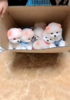 Cute Puppy Videos, Cute Animal Videos, Cute Animal Pictures, Cute Baby Puppies, Teacup Puppies, Cute Fluffy Dogs, Clever Dog, Cute Little Animals, Baby Cats