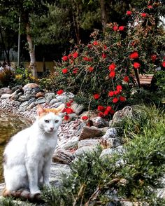 ������#bahar #spring #kedi #cat #koshka #animallovers #flower #çiçek #cute #beautiful #green #park #bahçe #nature #tree #catsofinstagram #istanbul #benimkadrajim #objektifimden #aniyakala #instaturkey #instalike #instatürk http://turkrazzi.com/ipost/1521201430764132379/?code=BUcZKRAgxgb