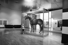 Phar Lap,  the greatest racehorse you've probably never heard of.