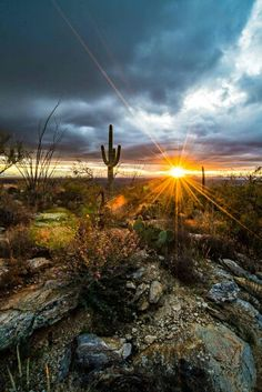Sonoran Desert- Most Beautiful Place in Arizona! Desert Dream, Desert Sunset, Sonora Desert, Beautiful Sunset, Beautiful World, Beautiful Places, Visualisation Techniques, Le Far West, Amazing Nature