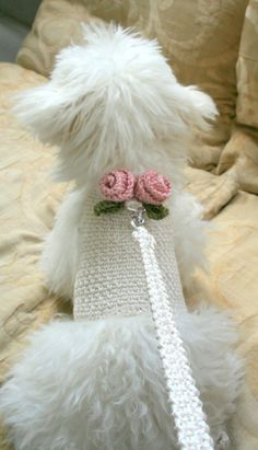 Dog harness with Matching Leash, Pet clothing, Dog top. Dog vest, Crochet Dog outfit, Dog, Harness, Pet Harness, Harnesses, Dog Harnesses, Dog Fashion, Crochet Harness This dog harness has two beautiful handmade roses on its back . The dog harness is made out of Cream cotton fabric. Care instruction: Machine wash gentle cycle or hand wash in cold water, Reshape and Air dry • If you see any loose end , simply cut the yarn to hide them in stitches again. I guarantee all ends are weaved in…