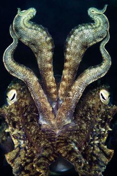 Las mejores imágenes submarinas del año le sumergirán en un mundo mágico