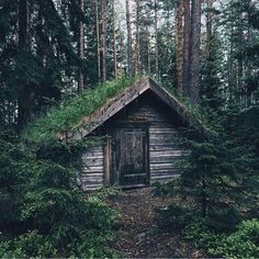 "53 Likes, 1 Comments - @nothingoverlyfancy on Instagram: ""#cabin #cabinporn #logcabin #cabinlife #cabininthewoods #cabininspiration #mountains #nature #love…"""