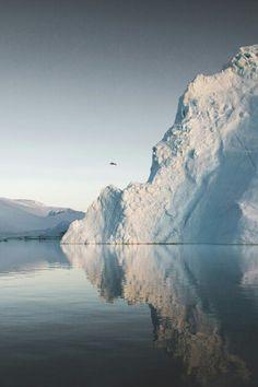 Iceberg frenzy