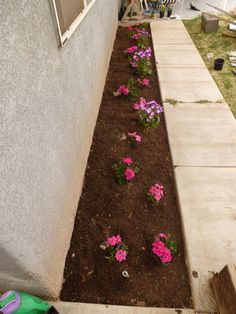How to start a flower bed-- step by step