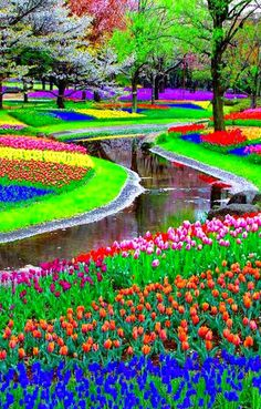 Simply beautiful!  I will go here one day!  Keukenhof - Amsterdam - The Netherlands