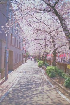 45 Ideas Photography Landscape Spring Scenery For 2019 Aesthetic Backgrounds, Aesthetic Wallpapers, Spring Scenery, Spring Nature, Anime Places, Japon Illustration, Anime Scenery Wallpaper, Iphone Wallpaper Japan, Wallpaper Backgrounds