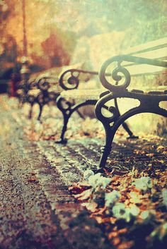 rusty benches...great foto!