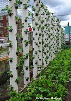 Jardim Vertical com canos de PVC!!!! :)