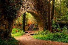 Visita al bosque encantado de Aldán en Pontevedra