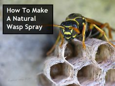 How To Make A Natural Wasp Spray--we had opted for the natural mint sprays at Home Depot, but this could be a better solution. Bug Control, Weed Control, Wasp Spray, Fly Spray, Wasp Killer, Spider Killer, Get Rid Of Wasps, Wal Art, Insecticide