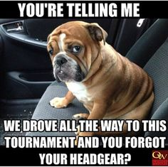 Bulldog puppy sitting in a car. This bulldog is ready to go Bulldog Puppies, Cute Puppies, Cute Dogs, Dogs And Puppies, Doggies, Funny Bulldog, 15 Dogs, Animals And Pets, Funny Animals