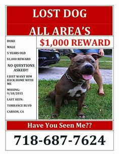 Stolen in los angeles, california !!! Please help by sharing & watching for Duke !