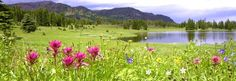 Introduction to Montana Plant Life