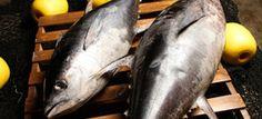 Empresas Líderes de Pesquería se Retiran de la Pesca del Atún Aleta Azul, Reiterando su Compromiso con la Sostenibilidad