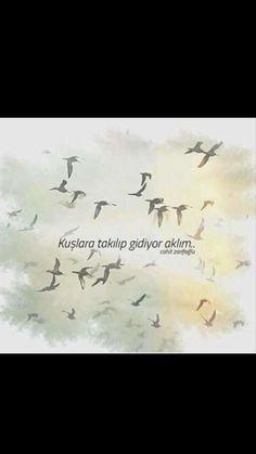 Kuşlara takılıp gidiyor aklım Cahit Zarifoğlu