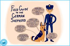 Check out our field guide for the ultimate infographic on the German Shepherd dog breed at petmd.com